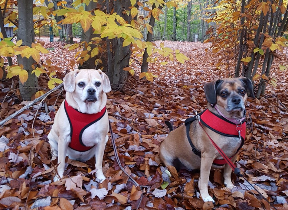 dog friendly campsites in PA dogs in woods