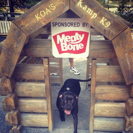 dog friendly campsites in PA dog in doghouse