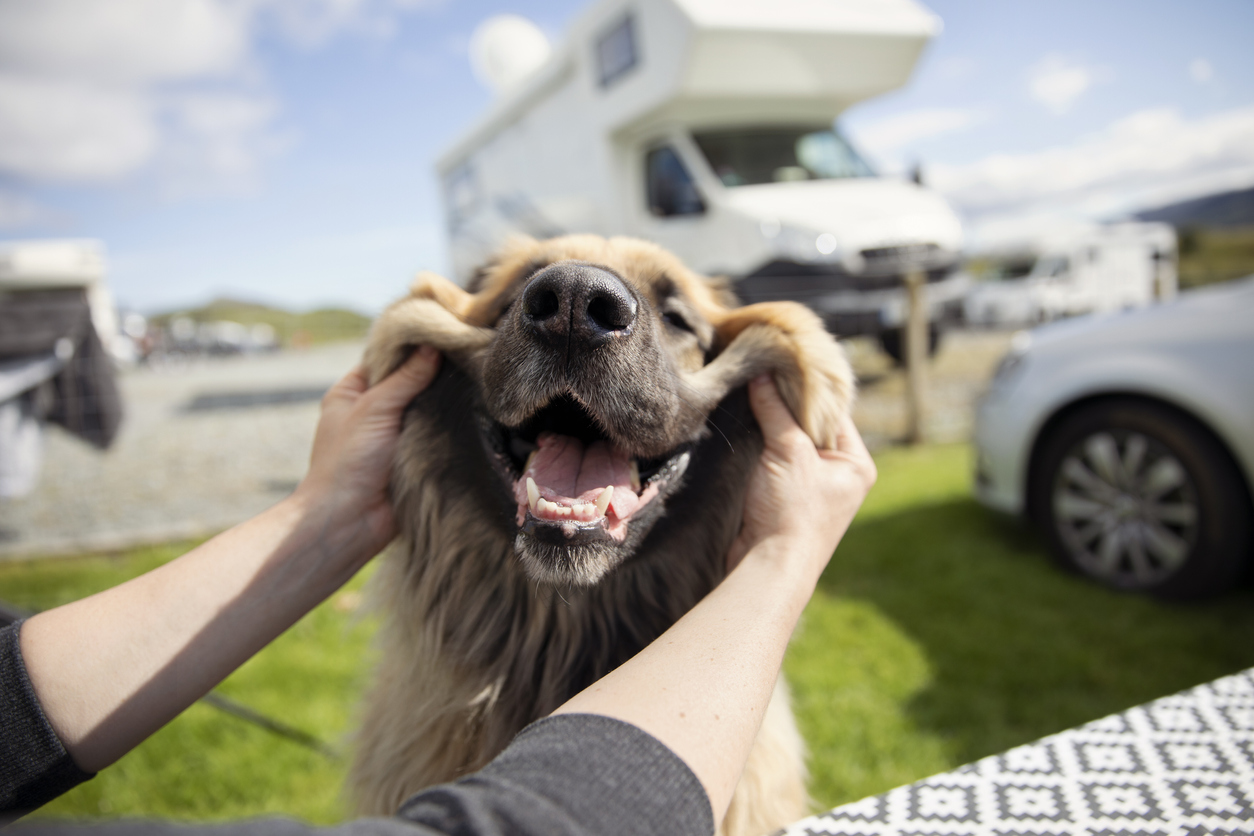Best Campgrounds for Your Dog in PA
